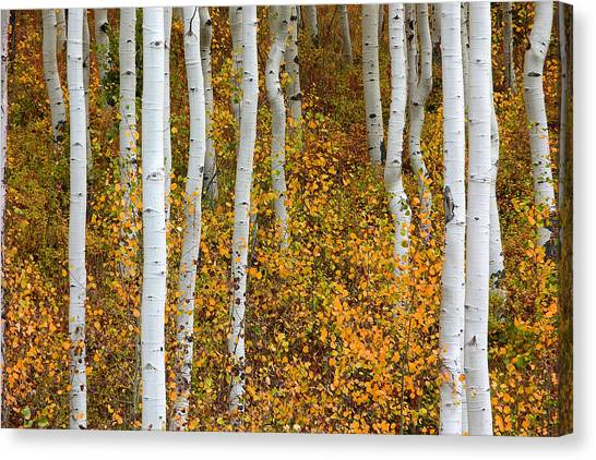 Fall Color Canvas Print by Dori Peers