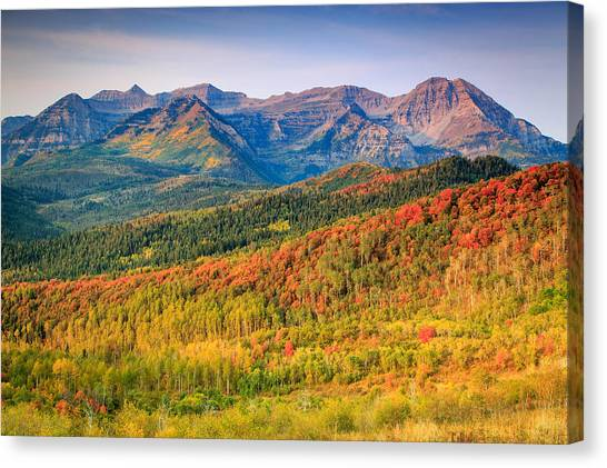 Fall Color On The East Slope Of Timpanogos. Canvas Print