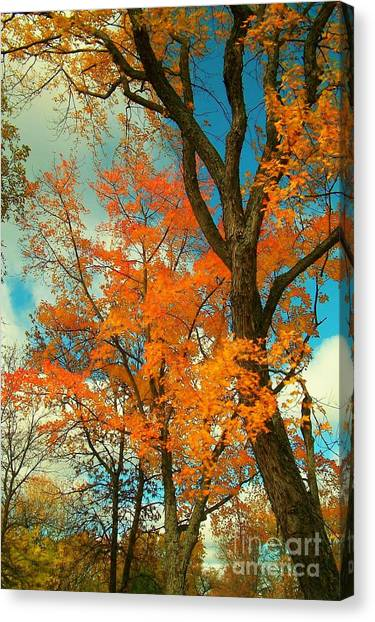 Fall Colors 2 Canvas Print by Marjorie Imbeau