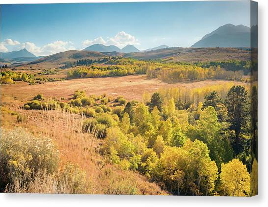 Fall Colors At Dunderberg Meadows Canvas Print