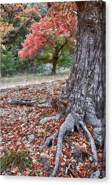 Fall Colors At Lost Maples Canvas Print