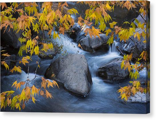 Fall Colors At Slide Rock Arizona Canvas Print
