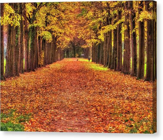 Fall Colors Avenue Canvas Print