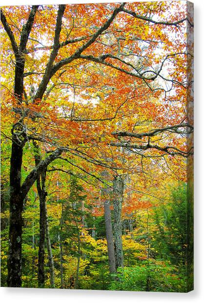 Fall Colors In Maine 1 Canvas Print by Jonathan Hansen