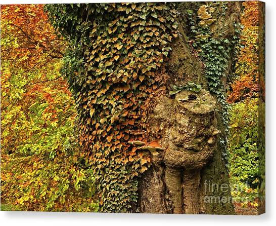 Fall Colors In Nature Canvas Print