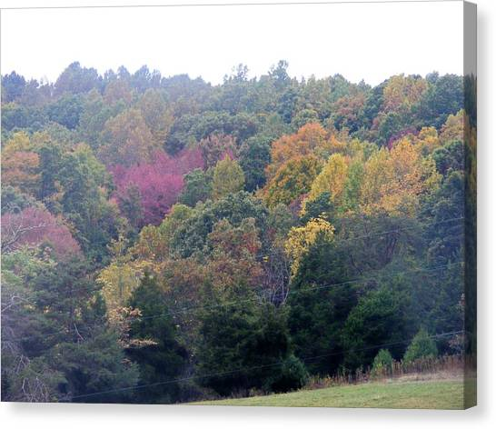 Fall Colors In Rockbridge County Canvas Print by Eddie Armstrong