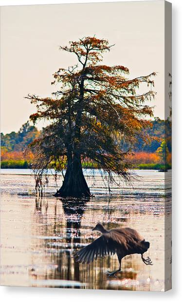 Fall Colors In The Marsh Canvas Print by Bill Perry