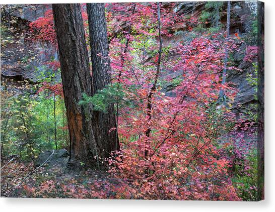 Fall Colors In West Fork Of Oak Creek Canyon Canvas Print