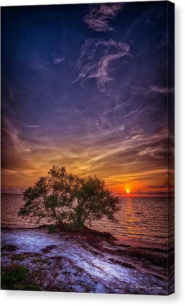 Mangrove Trees Canvas Print - Fall Colors by Marvin Spates