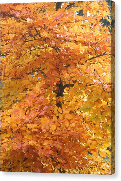 Fall Colors Canvas Print by Mary Gaines