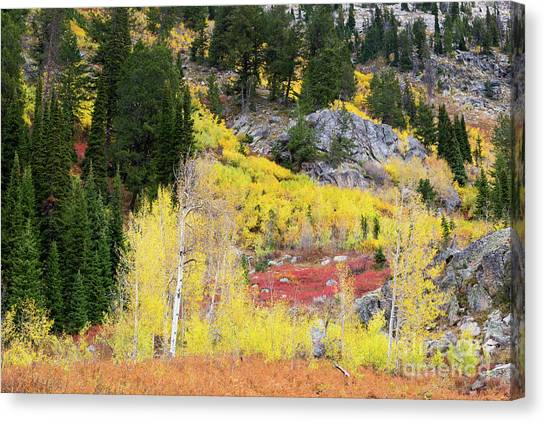 Great Falls Of Yellowstone Canvas Print - Fall Colors On Rocky Cliffs by Mike Cavaroc
