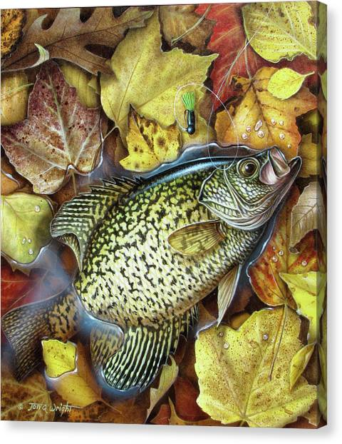 Angling Canvas Print - Fall Crappie by JQ Licensing