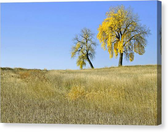 Fall Days In Fort Collins Co Canvas Print