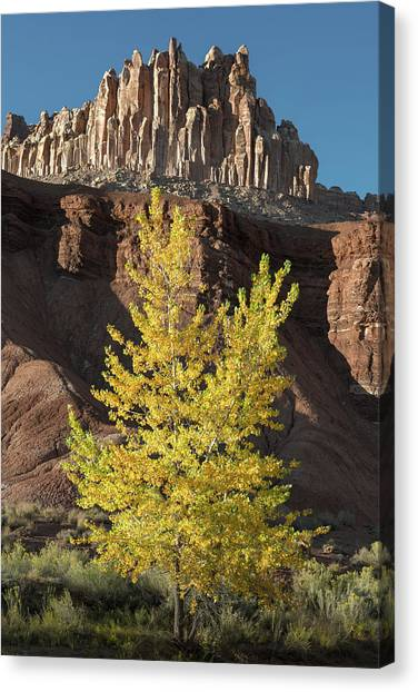 Capitol Reef Canvas Print - Fall Fashion by Joseph Smith