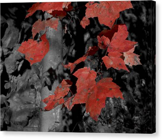 Fall Foliage In Pennsylvania Canvas Print by Bob Hahn