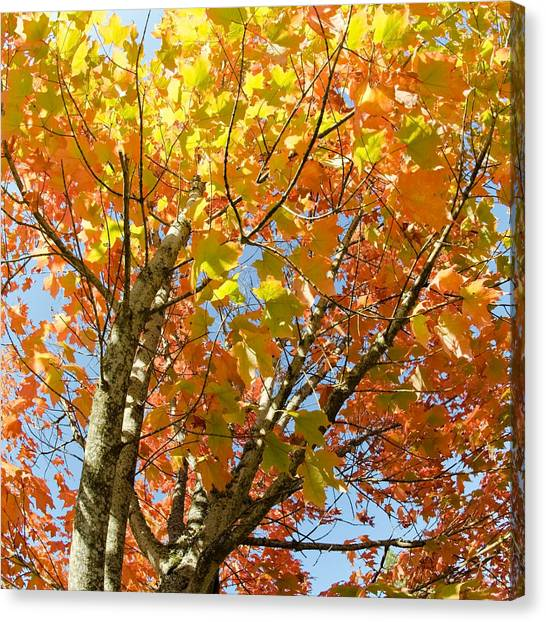 Canvas Print featuring the photograph Fall Foliage by Margaret Pitcher