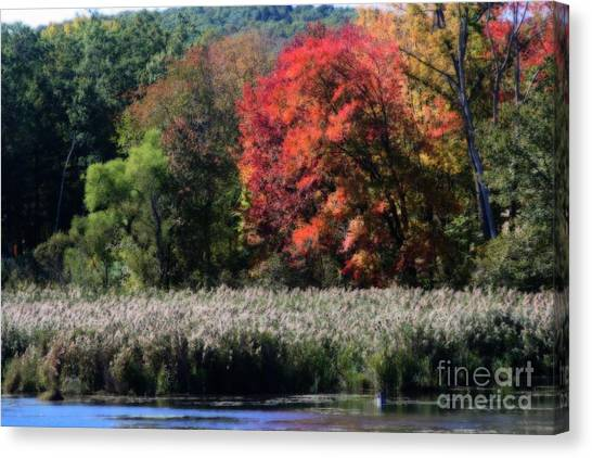 Fall Foliage Marsh Canvas Print