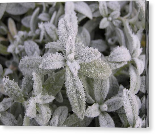 Fall Frost On Plants Canvas Print by Richard Mitchell