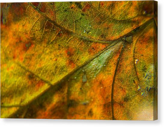 Red Camo Canvas Print - Fall Fusion by Bonnie Marquette