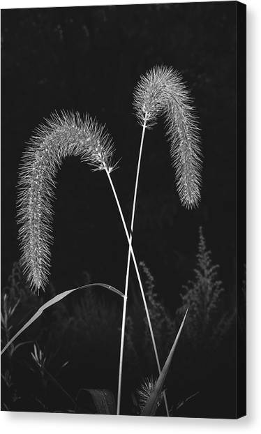 Fall Grass 2 Canvas Print