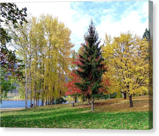 Oyama Canvas Print - Fall In Kaloya Park 1 by Will Borden