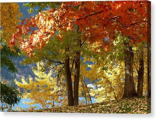 Oyama Canvas Print - Fall In Kaloya Park 4 by Will Borden