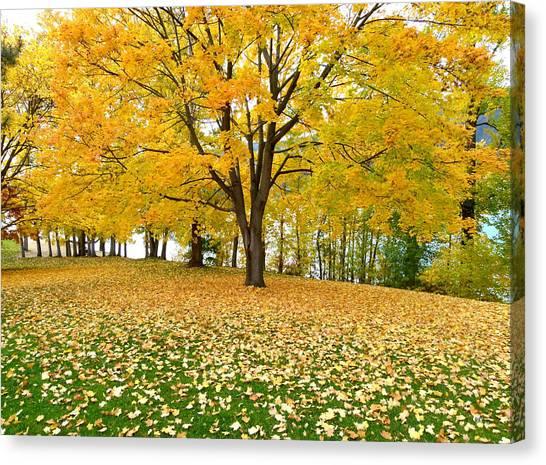 Oyama Canvas Print - Fall In Kaloya Park 7 by Will Borden