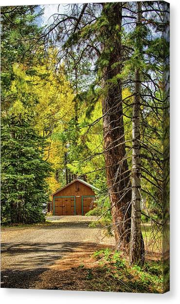 Fall In The Forest Canvas Print