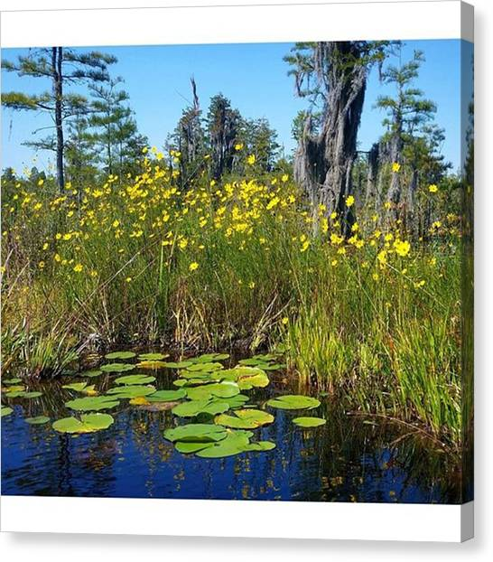 Okefenokee Canvas Print - Fall In The Okefenokee Swamp (now by Karen Breeze