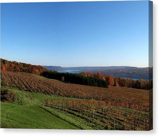 Fall In The Vineyards Canvas Print