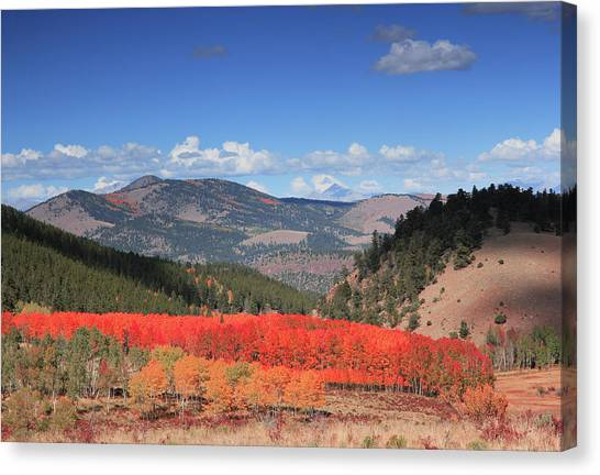 Fall In  Ute Trail  Canvas Print