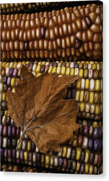 Indian Corn Canvas Print - Fall Leaf And Indian Corn by Garry Gay