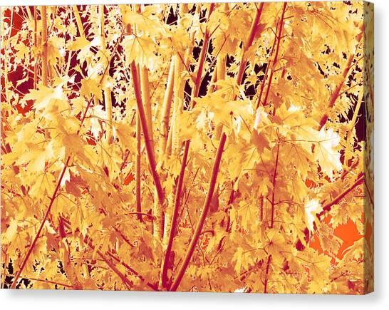 Fall Leaves #1 Canvas Print