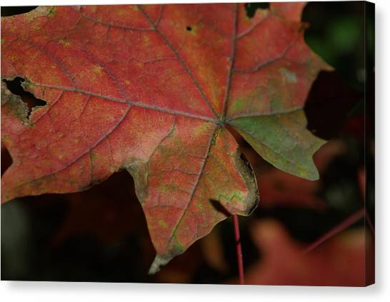 Fall Leaves 1 Canvas Print by Eric Workman