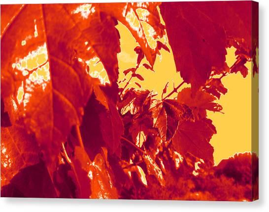 Fall Leaves #13 Canvas Print