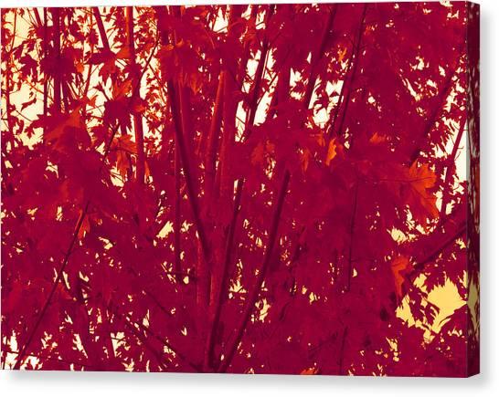 Fall Leaves #2 Canvas Print