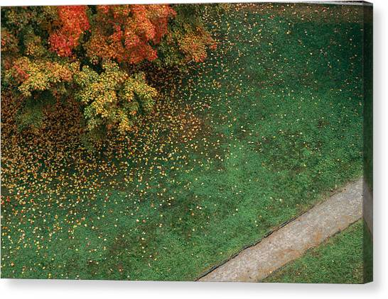 The University Of Tennessee Canvas Print - Fall Leaves Fall Onto Green Grass by Stephen Alvarez
