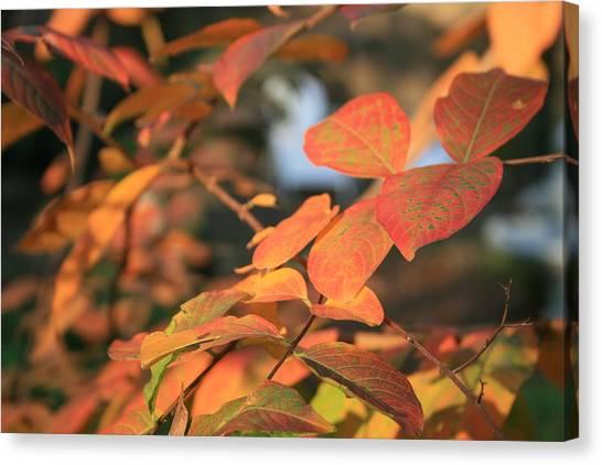 Fall Leaves Canvas Print by Linda Ebarb