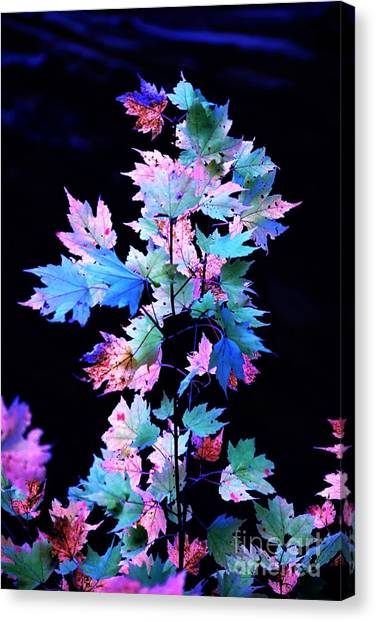 Fall Leaves1 Canvas Print