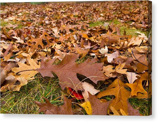 Fall Canvas Print