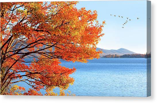 Fall Maple Tree Graces Smith Mountain Lake, Va Canvas Print