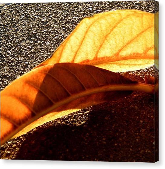 Fall Canvas Print by Mark Stevenson
