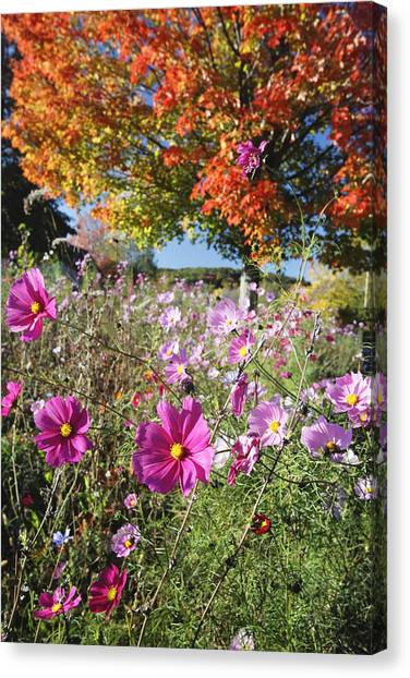 Fall Meadow With Wildfowers Canvas Print by George Oze