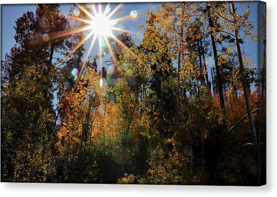 Canvas Print featuring the photograph Fall Mt. Lemmon 2017 by Elaine Malott