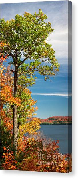 Canvas Print featuring the photograph Fall Oak Tree by Elena Elisseeva