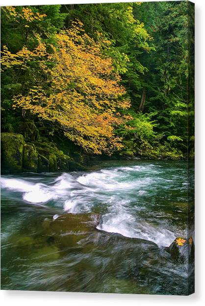 Fall On The Clackamas River, Or Canvas Print