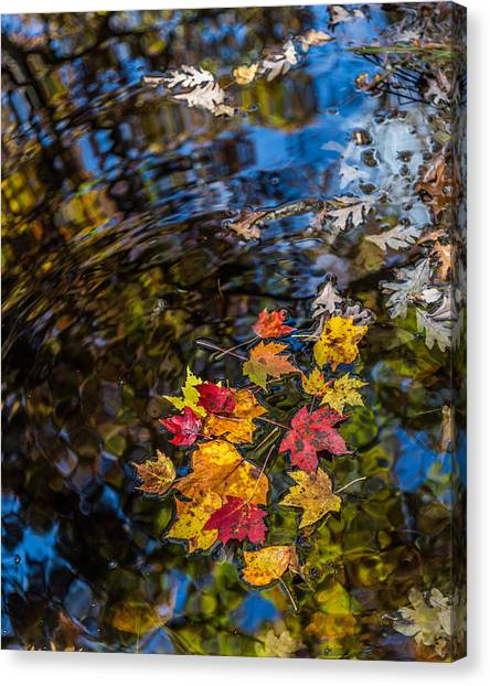 Fall Reflection - Pisgah National Forest Canvas Print