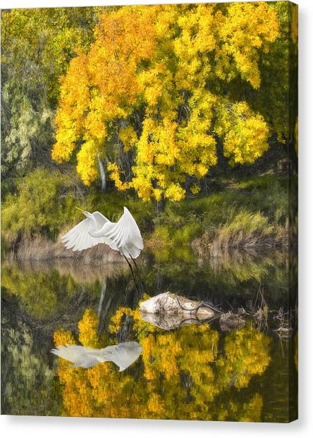 Fall Reflections Canvas Print by Chuck Brittenham