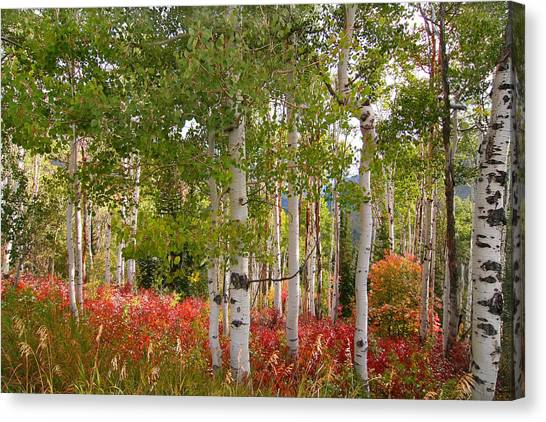 Fall Splender 47 Canvas Print