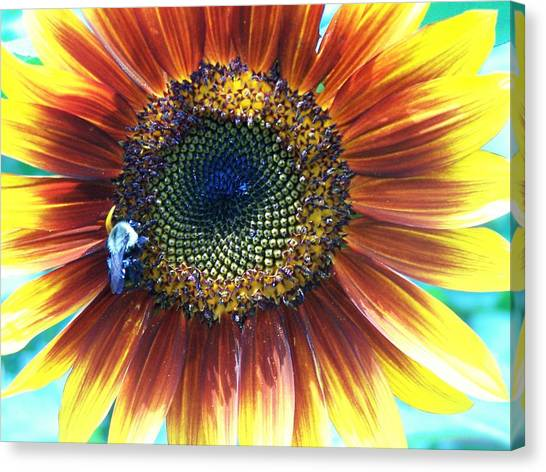 Fall Sunflower Canvas Print by Vijay Sharon Govender